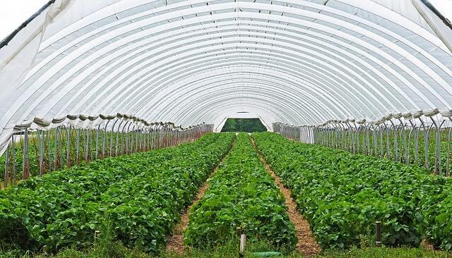 Farming going forward